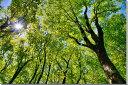 風景写真パネル 福島 土湯峠遊歩道 ブナッ子路 木漏れ日 72.8×51.5cm fuk-253-b2 インテリア ポスターとは違う,リビング,玄関にそのま..
