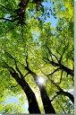 風景写真パネル 福島 土湯峠遊歩道 ブナッ子路 木漏れ日 72.7×53cm fuk-254-p20 インテリア ポスターとは違う,リビング,玄関にそのまま..