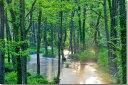 楽天写真パネルのあぁとすぺーすつくば風景写真パネル 福島 裏磐梯 長瀬川 72.7×50cm fuk-266-m20 インテリア ポスターとは違う,リビング,玄関にそのまま飾れる額がいらない,壁掛け,壁飾り。絵画 アート,アートパネル,癒やしの装飾をお祝い,プレゼント,ギフトにも。【楽ギフ_包装】