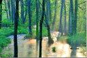 楽天写真パネルのあぁとすぺーすつくば風景写真パネル 朝日に光る長瀬川と水鳥 オシドリ 福島 裏磐梯 72.8×51.5cm fuk-397-b2 ポスター 風景,ポスター インテリア,絵画,アートパネル,風景,アートポスター,絵画 壁掛け,壁掛け アート,絵画 アート,壁飾り,お祝いギフトに【楽ギフ_包装】