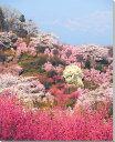 福島/花見山 桜 風景写真パネル【楽ギフ_包装】 【楽ギフ_のし宛書】 【楽ギフ_名入れ】