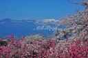 花見山 桜 さくら 福島の桃源郷 オリジナル 風景写真パネル 72.7×50cm FUK-161-M
