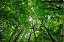 風景写真パネル 不動滝付近 木漏れ日 新緑と太陽06側面画像有 ボタニカル 太陽 木々 ウォールデコ アートパネル グラフィック インテリア 風水 プレゼント お祝い ギフト 贈答品 fdt-006-M30 【楽ギフ 包装】