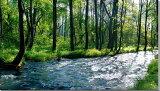 新緑の長瀬川 福島裏磐梯 風景写真パネル 125×70cm FUK-114 【楽ギフ包装】