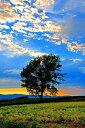 北海道美瑛 夕方の哲学の木 風景写真パネル 80.3×53cm HOK-126-M25【楽ギフ_包装】 【楽ギフ_のし宛書】 【楽ギフ_名入れ】
