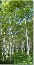 長野 蓼科 白樺林 風景写真タペストリー 壁飾り/壁掛け/インテリア