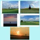 ポストカード 風景写真 北海道 美瑛の木 お得な5枚セット【...