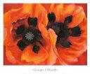 【アートポスター】Oriental Poppies (635×762mm) -オキーフ-