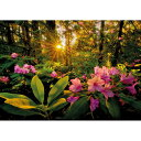 HEYE Puzzle・ヘイパズル 29662 Magic Forest : Rhododendron 2000ピース