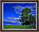 空と木と雲 F30サイズ 【油絵 直筆仕上げ】【額縁付】 油彩 風景画 オリジナルインテリア絵画 風水画 ブラウン額縁 1070×887mm 送料無料