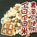 イロイロ米 黒米 赤米 玄米(精米無)農薬不使用 有機肥料 ありがとんぼ農園【1kg】