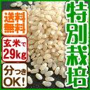 【新米】玄米(29kg)白米 兵庫県産コシヒカリ 特別栽培米有機肥料【同梱不可】【送料無料】【05P03Dec16】