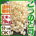 こうのとり米(29kg)コウノトリ育む農法 兵庫県産コシヒカリ【当日精米】【同梱不可】【送料無料】