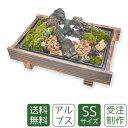 苔盆栽 ミニ庭園 アルプスSS【送料無料】