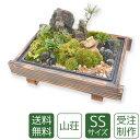 苔盆栽 ミニ庭園 山荘SS【送料無料】