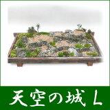 盆栽 盆景 ミニ庭園 天空の城 L 【楽ギフのし】【】05P02Mar14