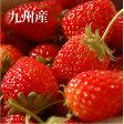 九州産 いちご 1パック九州野菜セットと同梱で送料無料