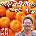 みかん ハウスみかん 3kg 大分県杵築産 お中元 お盆のお...
