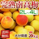 南高梅 完熟 5kg 梅干し用 梅酒用 梅ジュース 梅エキス に最適 生梅 大分産 【送料無料】