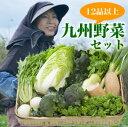 九州とれたて野菜セット12品以上!【送料無料】【九州産】畑からご自宅まで最短翌日着で鮮度抜群!