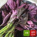 赤しそ 葉 2kg 8束 梅干し用 赤紫蘇ジュース用 福岡県芦屋産 ご予約品