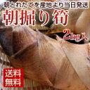朝掘りたけのこ 2kg 朝とれたてタケノコ 筍を産地直送 【送料無料】