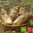 たけのこ 朝掘り 2kg 筍 福岡県産 産地直送