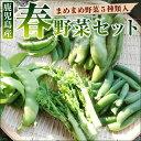 春のまめ豆野菜セット グリーンピース そらまめ スナップエンドウ いんげん 菜の花など春野菜5種類入り