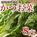かつお菜 8束 【送料無料】 カツオ菜/かつおな/カツオナ/鰹菜 【年末ご予約商品】