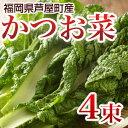 かつお菜 4束 【送料無料】 カツオ菜/かつおな/カツオナ/鰹菜 【年末ご予約商品】