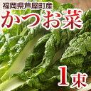 かつお菜 1束 カツオ菜/かつおな/カツオナ/鰹菜 【年末ご...