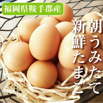 Kyushu Fukuoka Prefecture fresh fresh sea eggs 10 pieces set