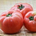 トマト(2〜3個入) 福岡産