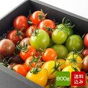 トマトの宝石箱 フルーツトマトの詰め合わせ 父の日 お中元 ギフト