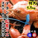 【送料無料!】松葉ガニ1.1kg前後(1杯)(カニ・かに・松...