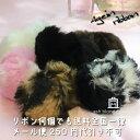 楽天プードル専門店アッシュブロンドぼんぼんリボン again ribbon アゲインリボン 犬用リボン 犬用アクセサリー