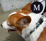 愛犬 首輪 ASHU トラッド Mサイズ