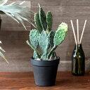 樂天商城 - フェイクグリーン 造花 サボテン 観葉植物 鉢植え [98907]【 インテリアグリーン 多肉植物 ウチワサボテン 30cm ポット かっこいい おしゃれ】