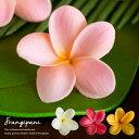 超リアルなプルメリアの造花 フランジパニ [4色展開][61...