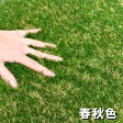 【8/24頃出荷分のご予約受付中(夏色・春秋色)】色までリアルなロール人工芝(芝丈30mm・10m×1m)夏色・春秋色のカラーバリエーションは当店だけ!商品型番:fme-3010