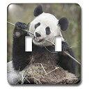 【中古】【輸入品・未使用未開封】3drose LSP 132354?_ 2中国、Wolong、Giant Panda Bear Eating竹as07?aga0009アリスガーランドライトスイッチカバー