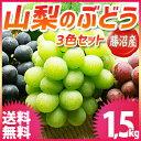 ぶどう 山梨 1.5kgセット 送料無料 ☆勝沼産の高級ブド...