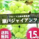 山梨県 ぶどう [瀬戸ジャイアンツ 1.5kg] 送料無料 巨峰 山梨産 ブドウ ぶどうばたけ