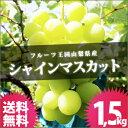 シャインマスカット 1.5kg 送料無料 山梨県 ぶどう 山梨産 ブドウ ぶどうばたけ