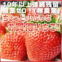 【いちご 送料無料】ちょっと小粒なイチゴの詰め合わ