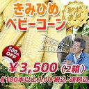 《100本以上》【5月中旬より出荷予定】希少!朝採りとうもろこし。きみひめ ゴールド