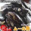 【サイズ不揃い】北海道釧路昆布森産ムール貝(カラスガイ)3kg 訳あり