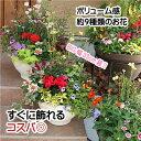 【送料無料】【春・夏】季節の花デザイナー寄せ植え「87nav...