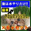 【産地直送】【本州送料無料】製造直販激安!!後は水だけ「猫草...