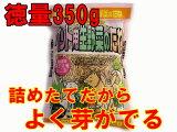 【生産直売特価】【無農薬種子】【高発芽率種子】猫草の種・犬草の種 徳量350g